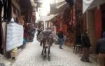 Donkey in Fez, Morocco